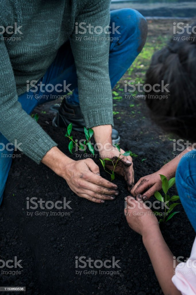 latina girl with pink blouse and latin man in jean shirt sows tree...