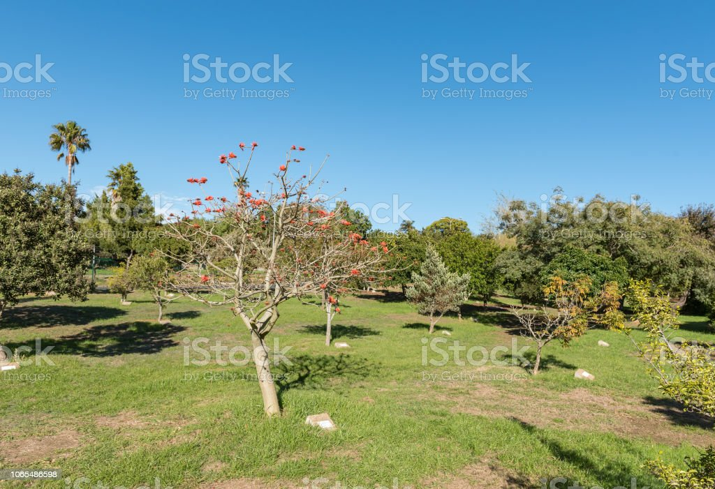 Arboretum at Majik Forest in Durbanville in the Western Cape stock photo