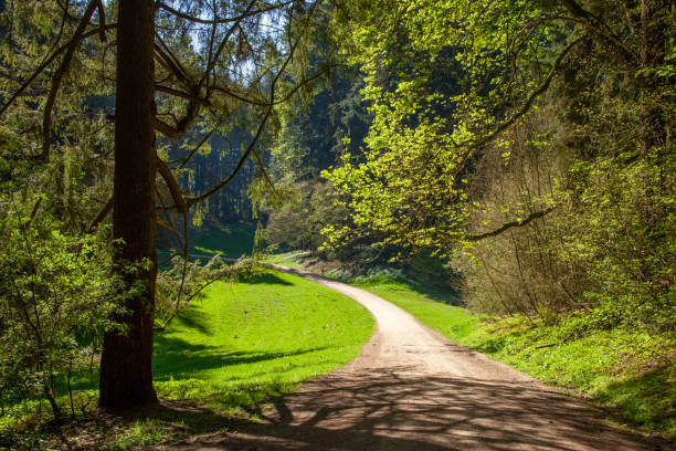 Arboretum forest - Tervuren stock photo