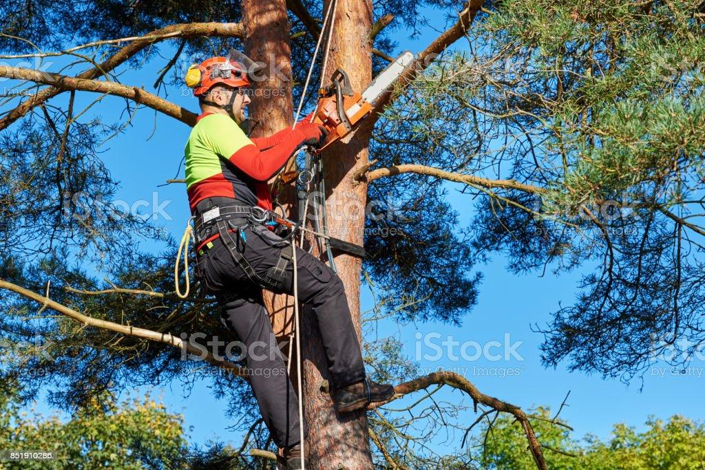 Arborist no trabalho - foto de acervo