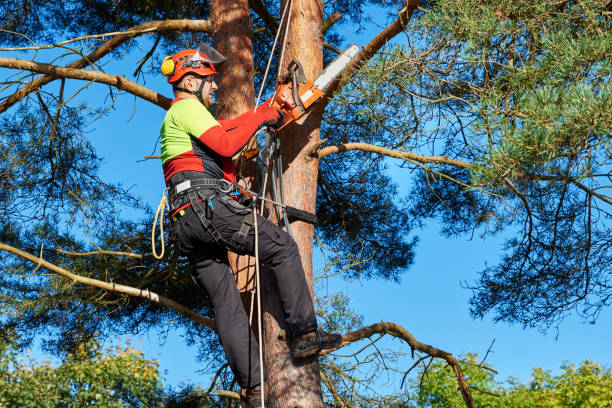 Arborist at work stock photo