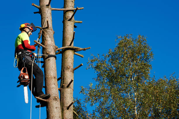 arborist at work - tree surgeon stock photos and pictures