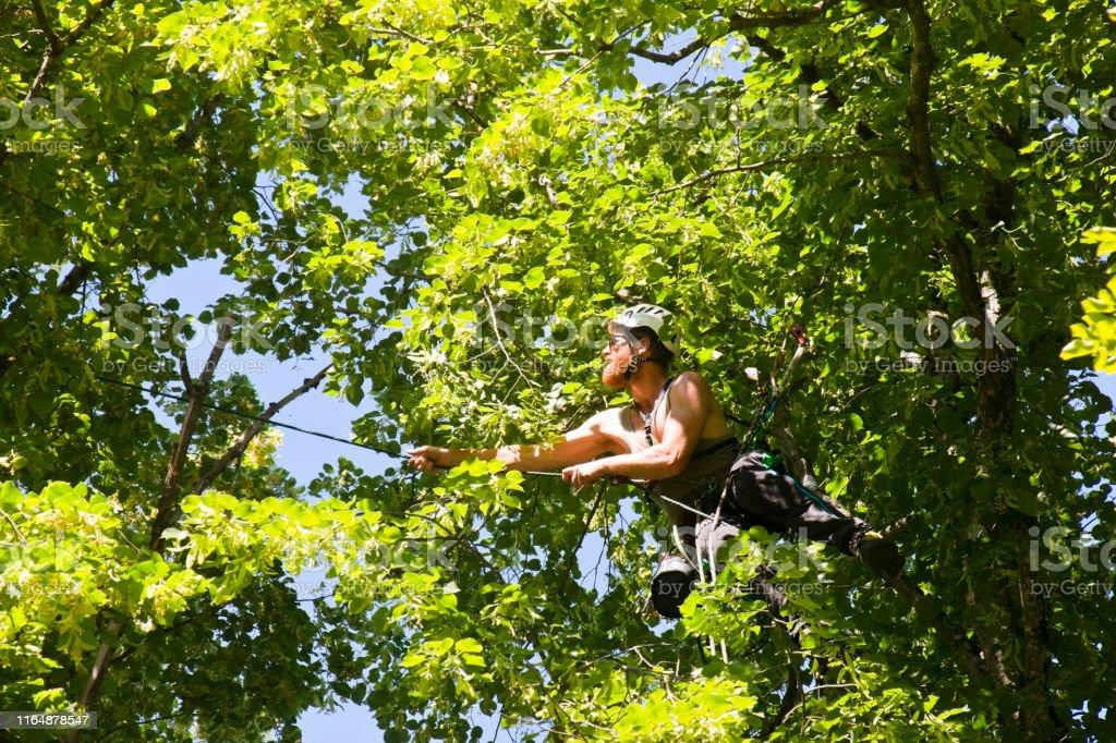 Arborist Climbing From Tree To Tree Stock Photo Download Image Now Istock