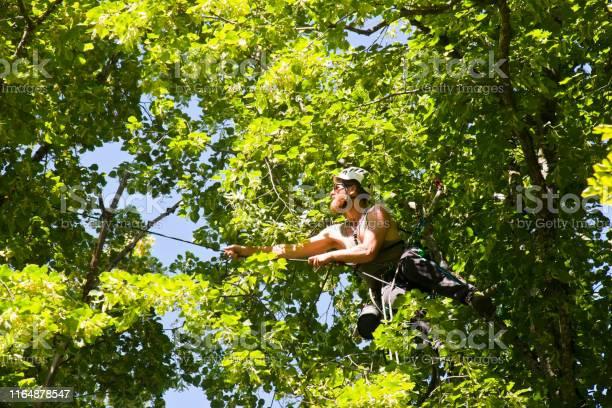 Photo of Arborist climbing from tree to tree