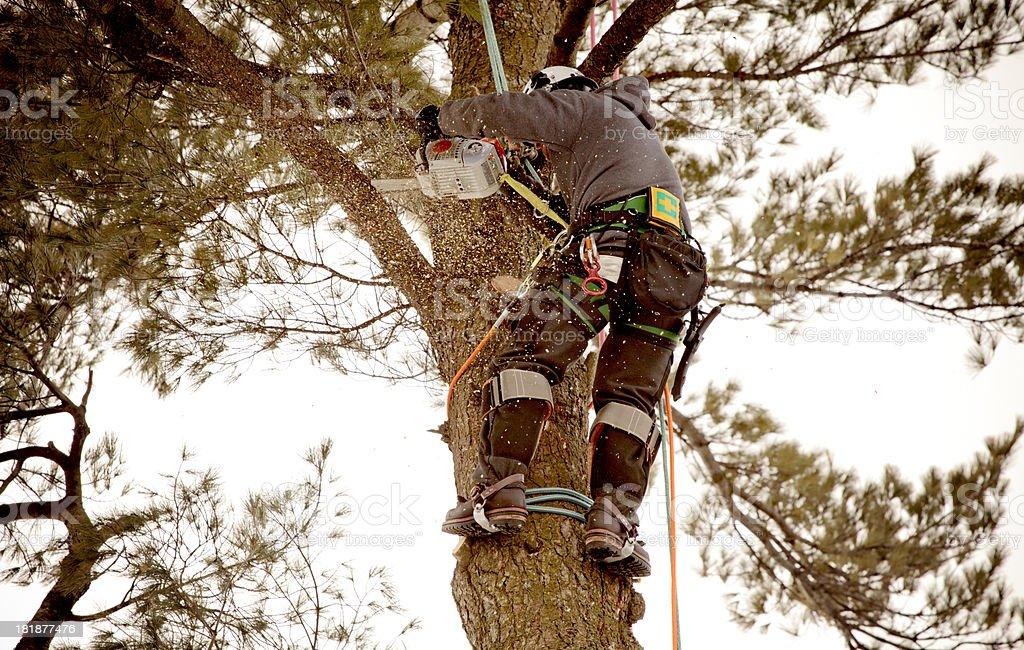 Arborist cutting branch stock photo