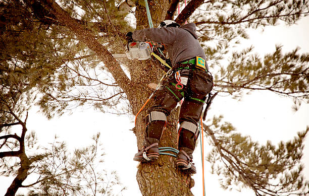arborist cutting branch - tree surgeon stock photos and pictures