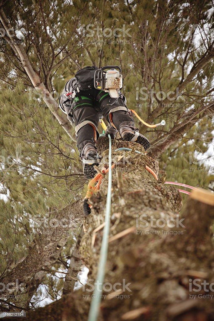 Arborist cutting branches stock photo