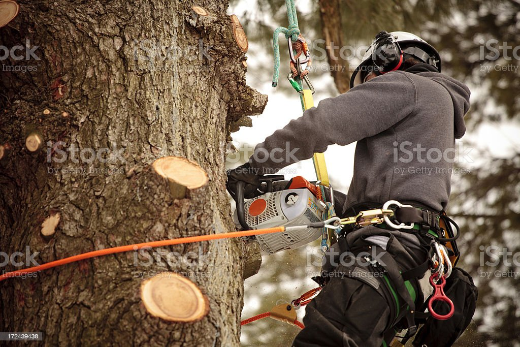 Arborist cutting branches royalty-free stock photo
