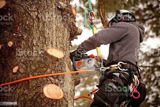 Arborist cutting branches picture id172439438?b=1&k=6&m=172439438&s=612x612&h=f2j9gverzssnyhiienm2zwnzxaghldrd6hjl nxj6pw=