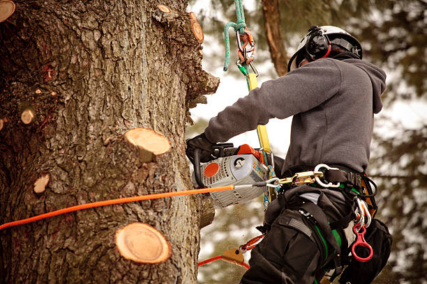 Arborist cutting branches stock photo