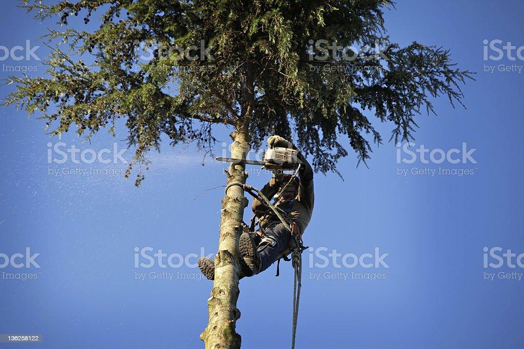Arborist Schneiden Baum – Foto