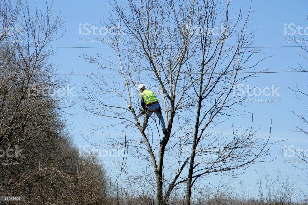 Arborist hard at work stock photo