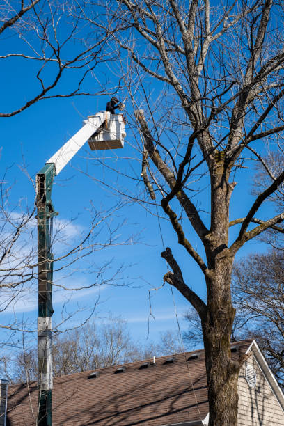 Arborist in a Bucket Truck Trimming a Tree stock photo