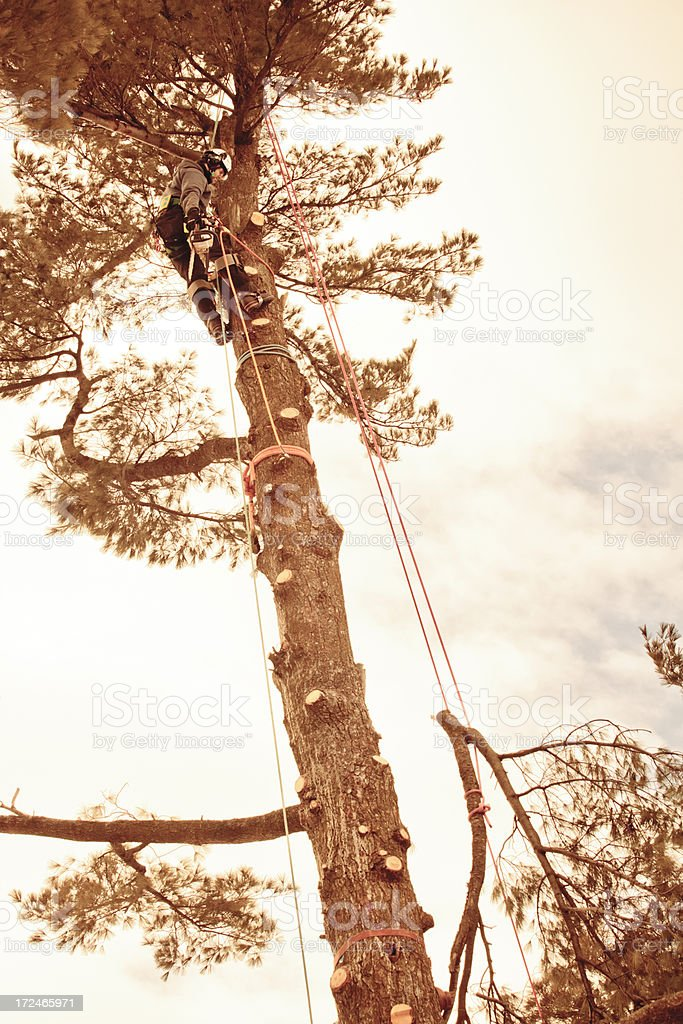 Arborist rigging branches royalty-free stock photo