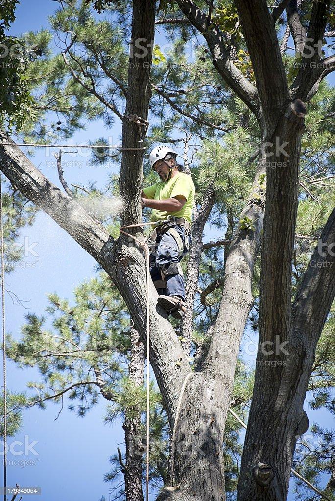 Arborist Trimming Tree royalty-free stock photo