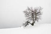 Arbre isolé et sans feuilles, en hiver, sous la neige