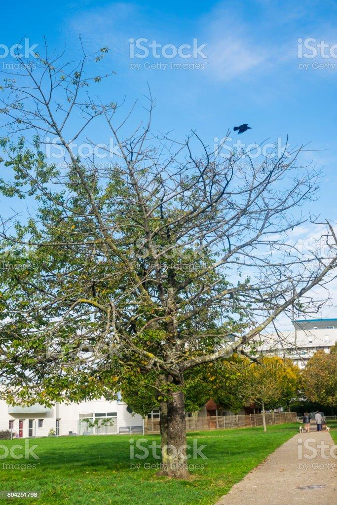 arbre et corbeau royalty-free stock photo