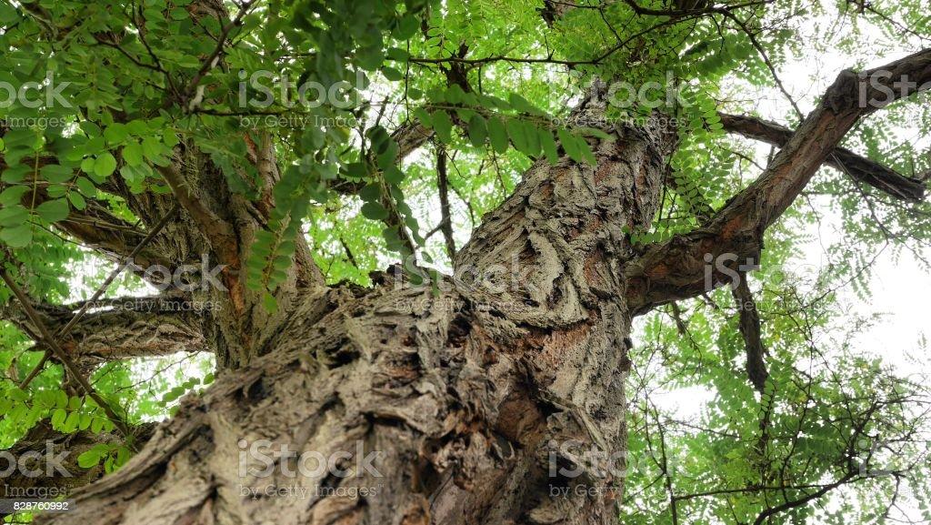 arbre - Photo