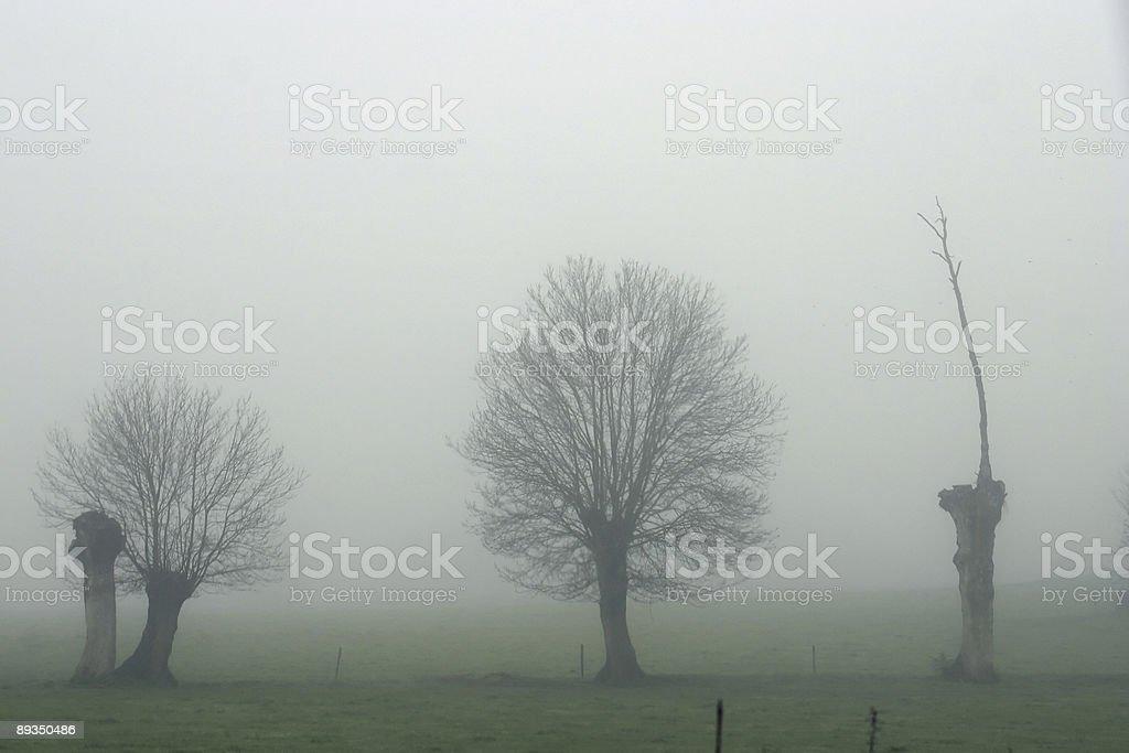 Arbres dans le brouillard stock photo