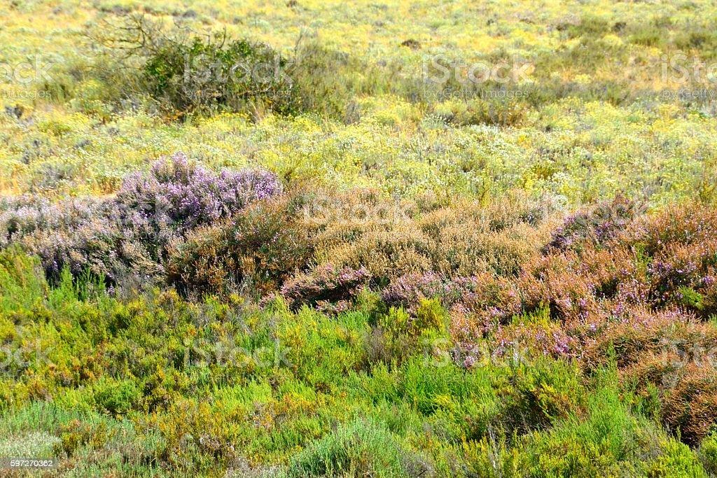 Arbustos en la costa del Algarve, Portugal royalty-free stock photo