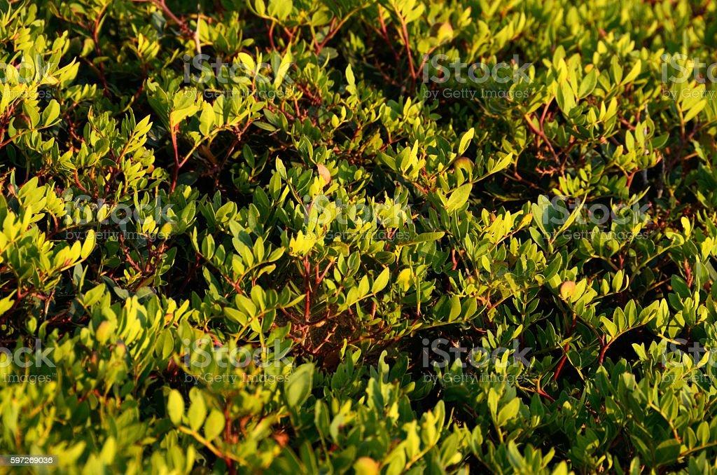 Arbustos en Ponta da Piedade, Lagos Lizenzfreies stock-foto