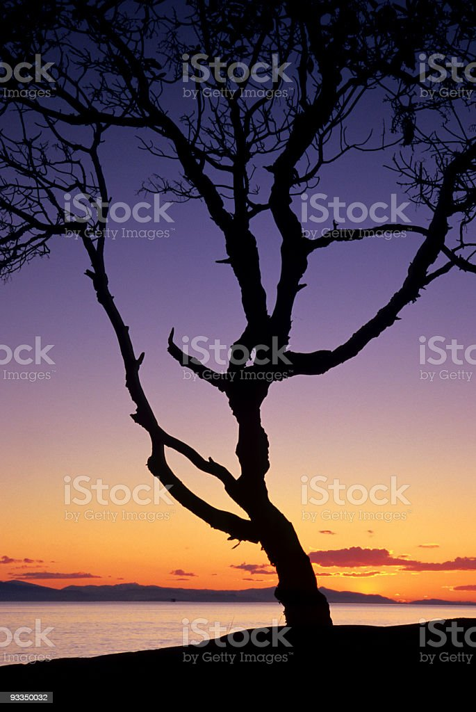 Arbutus (Madrona) Silhuette, West Vancouver, British Columbia stock photo