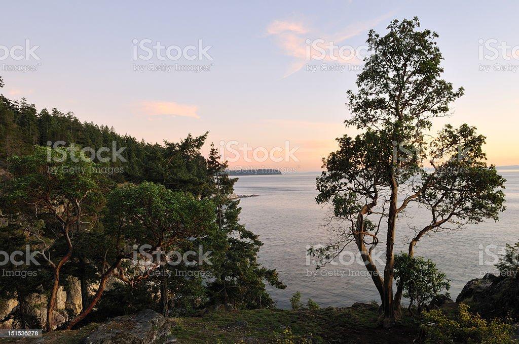 Arbutus tree on beach at sunset stock photo