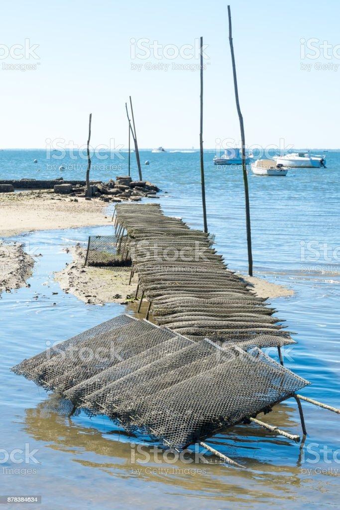 Bassin d'Arcachon (France), bancs d'huîtres - Photo