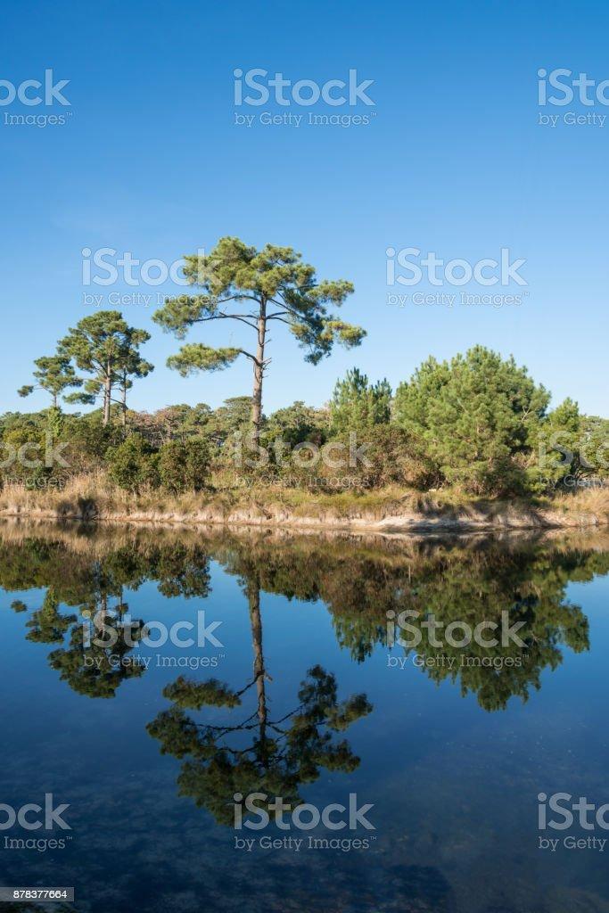 Bassin d'Arcachon (France), la réserve naturelle «Les réservoirs de Piraillan» - Photo