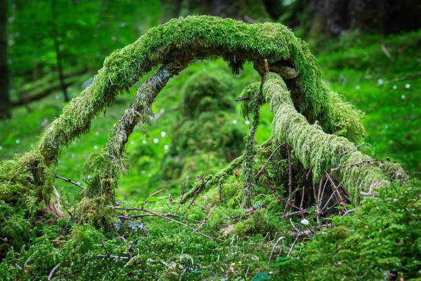 Arch formed from branches covered with moss. stock photo