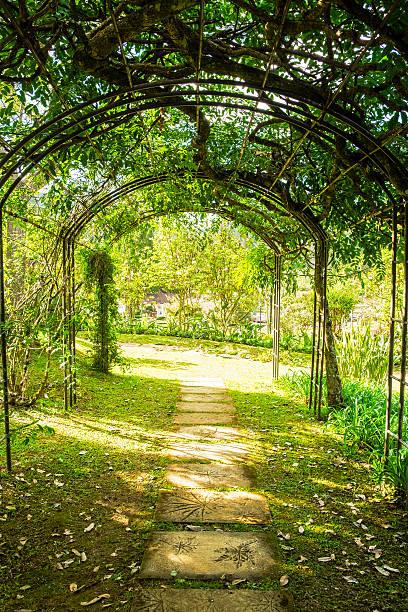 arch green soft natural path walkway - der geheime garten stock-fotos und bilder