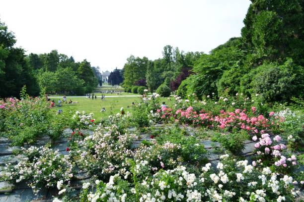 Arch of Peace and bushes of roses of Simplon park, Parco Sempione in Milan. stock photo
