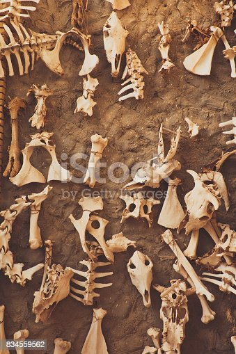 istock Archaeological excavation, detail of an ancient exploration, prehistory 834559562