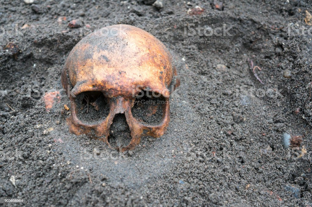 Archaeological excavation with skull still half buried in the ground stock photo