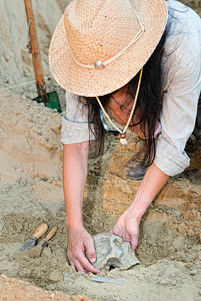 Archaeologist unearthing ancient skull stock photo