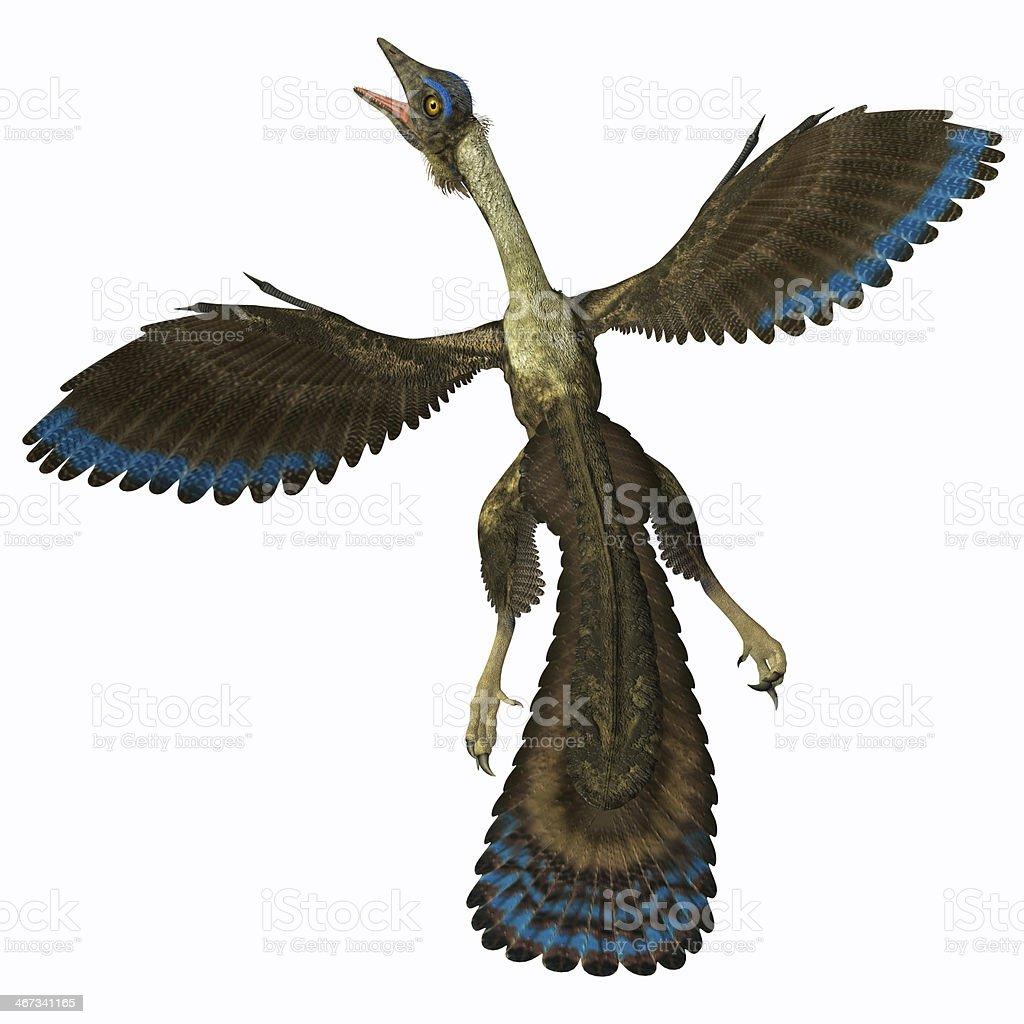 Archaeopteryx on White stock photo