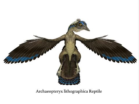 Frente De Reptiles Archaeopteryx Foto de stock y más banco ...