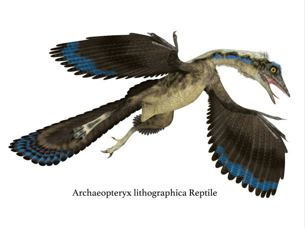 Archaeopteryx Reptile in Flight stock photo