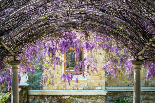 Gewölbte Constructionr bedeckt mit bunten lila lila hängenden Glyzinien Blüten über Treppen Weg zu einem Haus – Foto