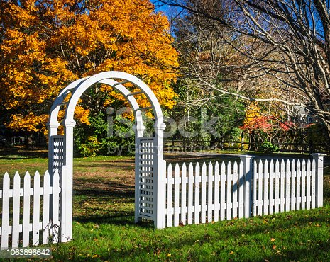 A white picket fence with an arched trellis entrance leads to a yard with a maple tree in full fall foliage