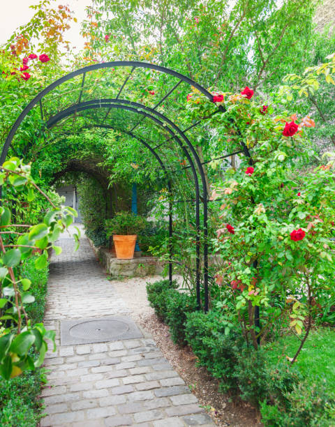 Arched entrance with roses stock photo