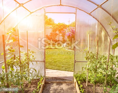 arched small greenhouse on a private backyard