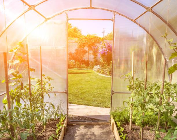 gebogen kleine kas op prive achtertuin met zon flare - glass house stockfoto's en -beelden