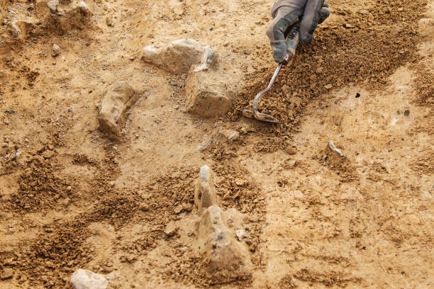 Archeological tools, Archeologist working on site,  hand and tool. stock photo