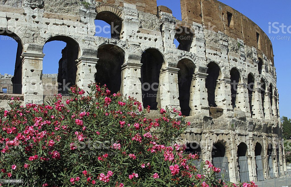 Arches of the Colosseum among flowering plants stock photo