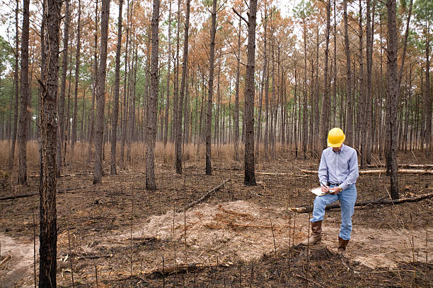 Architect, construcition developer on new building site. Burned forest. New building project location.   MORE LIKE THIS... in lightboxes below. forester stock pictures, royalty-free photos & images