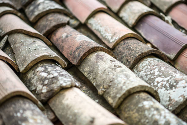 786 Roman Roof Tiles Stock Photos Pictures Royalty Free Images Istock
