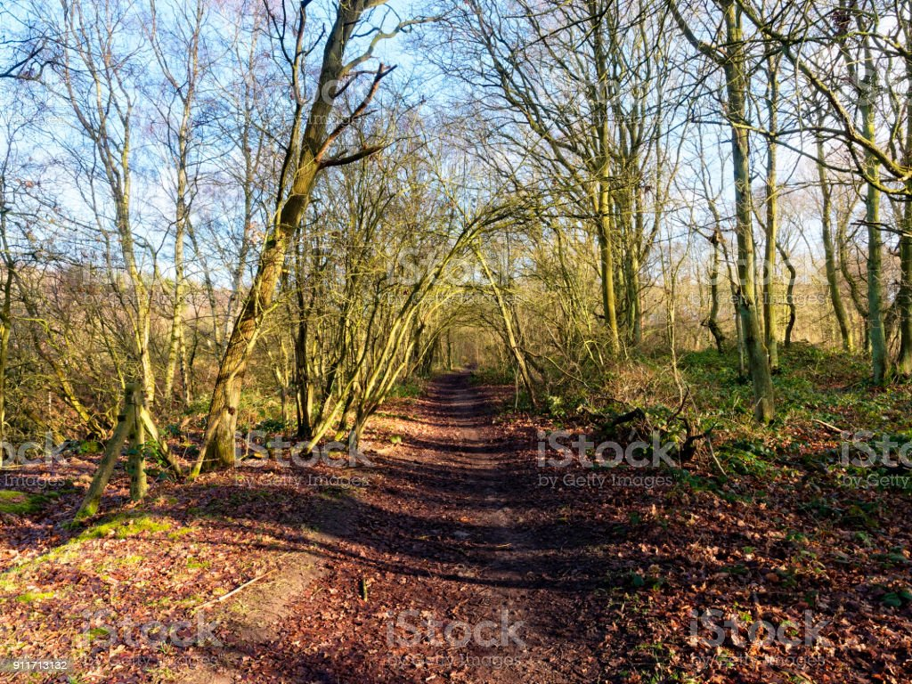 Archway of trees stock photo