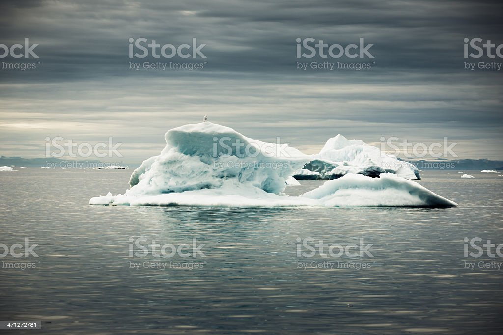 Arctic Iceberg under Dramatic Skyscape West Greenland Iceberg drifting in the arctic north atlantic ocean in tranquil water under dramatic sky. Seagull on top of Iceberg. Greenland, North West Coast on the Horizon. Animal Stock Photo