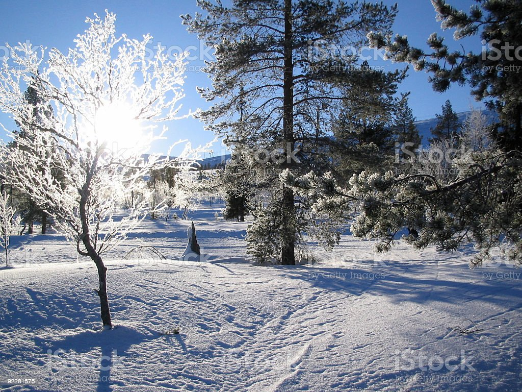 Arctic Sunlight in Winter royalty-free stock photo